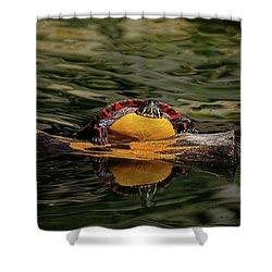 Turtle Taking A Swim Shower Curtain
