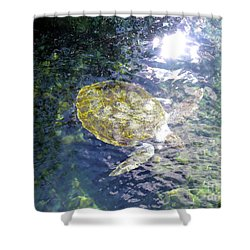 Shower Curtain featuring the photograph Turtle Water Glide by Francesca Mackenney