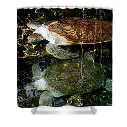 Turtles Shower Curtain by Angela Murray