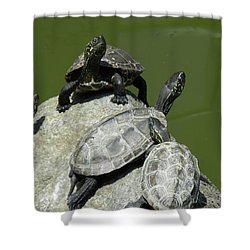 Shower Curtain featuring the photograph Turtles At A Temple In Narita, Japan by Breck Bartholomew