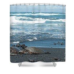 Turtles On Black Sand Beach Shower Curtain