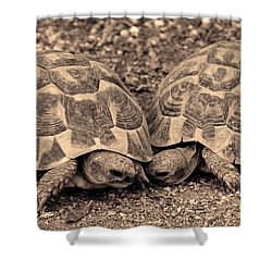 Turtles Pair Shower Curtain by Gina Dsgn