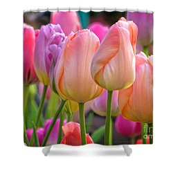 Tutti Frutti Tulips Shower Curtain by Dee Flouton