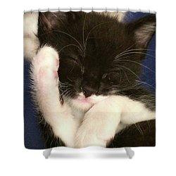 Tuxedo Kitten Snoozing Shower Curtain