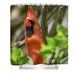 Tweeting Shower Curtain