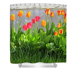 Twenty-five Tulips Shower Curtain