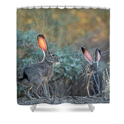 Twilight Jackrabbits Shower Curtain