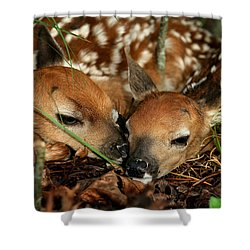 Twin Newborn Fawns Shower Curtain by Michael Dougherty