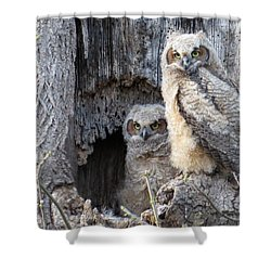 Shower Curtain featuring the photograph Twin Owls by Jeanette Oberholtzer