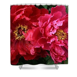 Twin Peonies Shower Curtain