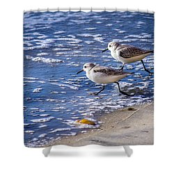 Twin Plovers Shower Curtain