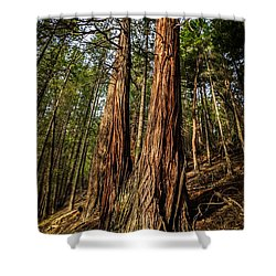 Twin Reds Shower Curtain