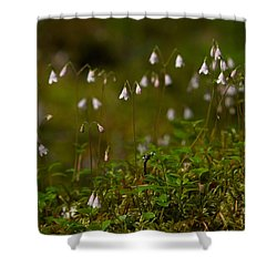Twinflower Shower Curtain by Jouko Lehto