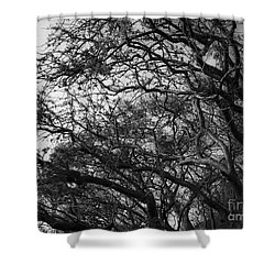 Twirling Branches Shower Curtain