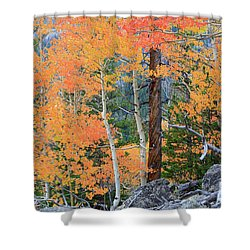 Twisted Pine Shower Curtain