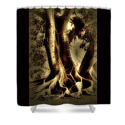 Shower Curtain featuring the photograph Twisted Trees by Tom Prendergast