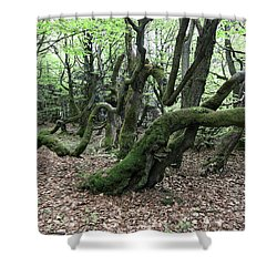 Shower Curtain featuring the photograph Twisted Trunks Of Beech Trees - Old Beech Forest by Michal Boubin