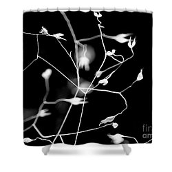 Twittering Seed Pods Bw Shower Curtain