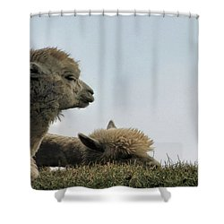 Two Alpaca Shower Curtain by Pat Cook