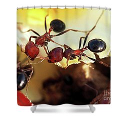 Two Ants In Sunny Day Shower Curtain