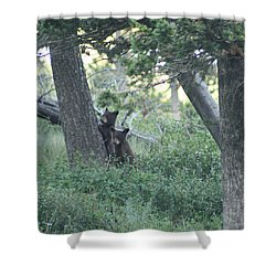 Two Bear Cubs Shower Curtain by Mary Mikawoz