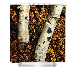 Two Birch Trees Shower Curtain