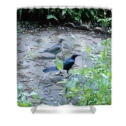 Shower Curtain featuring the photograph Two Birds by Felipe Adan Lerma