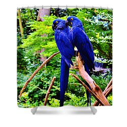 Two Birds Of A Feather Shower Curtain