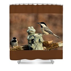 Two Black-capped Chickadees And Frog Shower Curtain by Sheila Brown