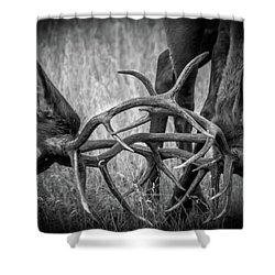 Two Bull Elk Sparring Shower Curtain