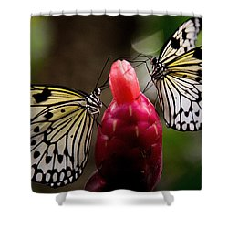 Two Butterflies Shower Curtain
