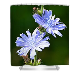 Shower Curtain featuring the photograph Two Chickory Flowers  by Lyle Crump