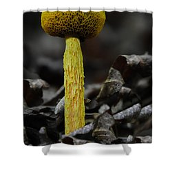 Two Colored Bolete Shower Curtain