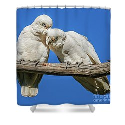 Two Corellas Shower Curtain