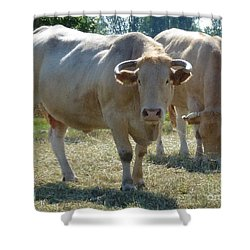 Shower Curtain featuring the photograph Two Cows by Jean Bernard Roussilhe
