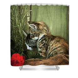 Two Cute Kittens Shower Curtain