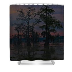 Two Cypress At Dawn Shower Curtain by Kimo Fernandez