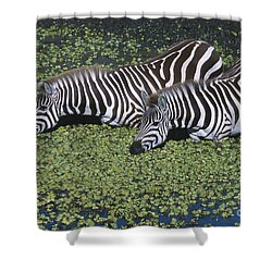 Two For Lunch Shower Curtain by Sandra Bronstein