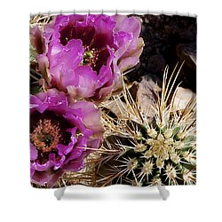 Shower Curtain featuring the photograph Two Fucshia Blossoms  by Phyllis Denton