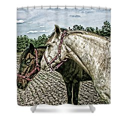 Two Horses In A Field Shower Curtain