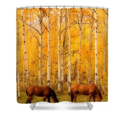 Two Horses In The Autumn Colors Shower Curtain by James BO  Insogna