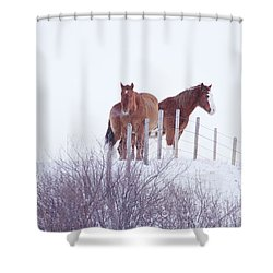 Two Horses In The Snow Shower Curtain