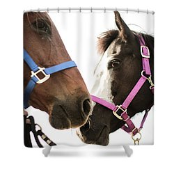 Shower Curtain featuring the photograph Two Horses Nose To Nose In Color by Kelly Hazel