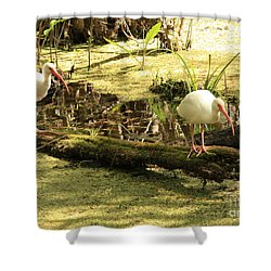 Two Ibises On A Log Shower Curtain by Carol Groenen