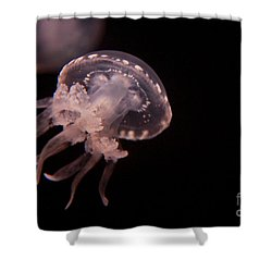 Two Moon Jellies Shower Curtain
