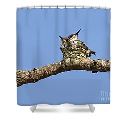 Two Of A Kind... Shower Curtain by Nina Stavlund