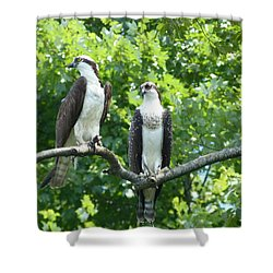 Two On A Limb - Osprey Shower Curtain by Donald C Morgan