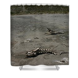 Shower Curtain featuring the photograph Two Or 2 Halves Of 1 by Marie Neder