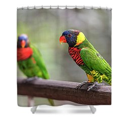 Two Parrots Shower Curtain