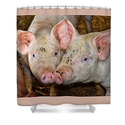 Two Pigs Shower Curtain